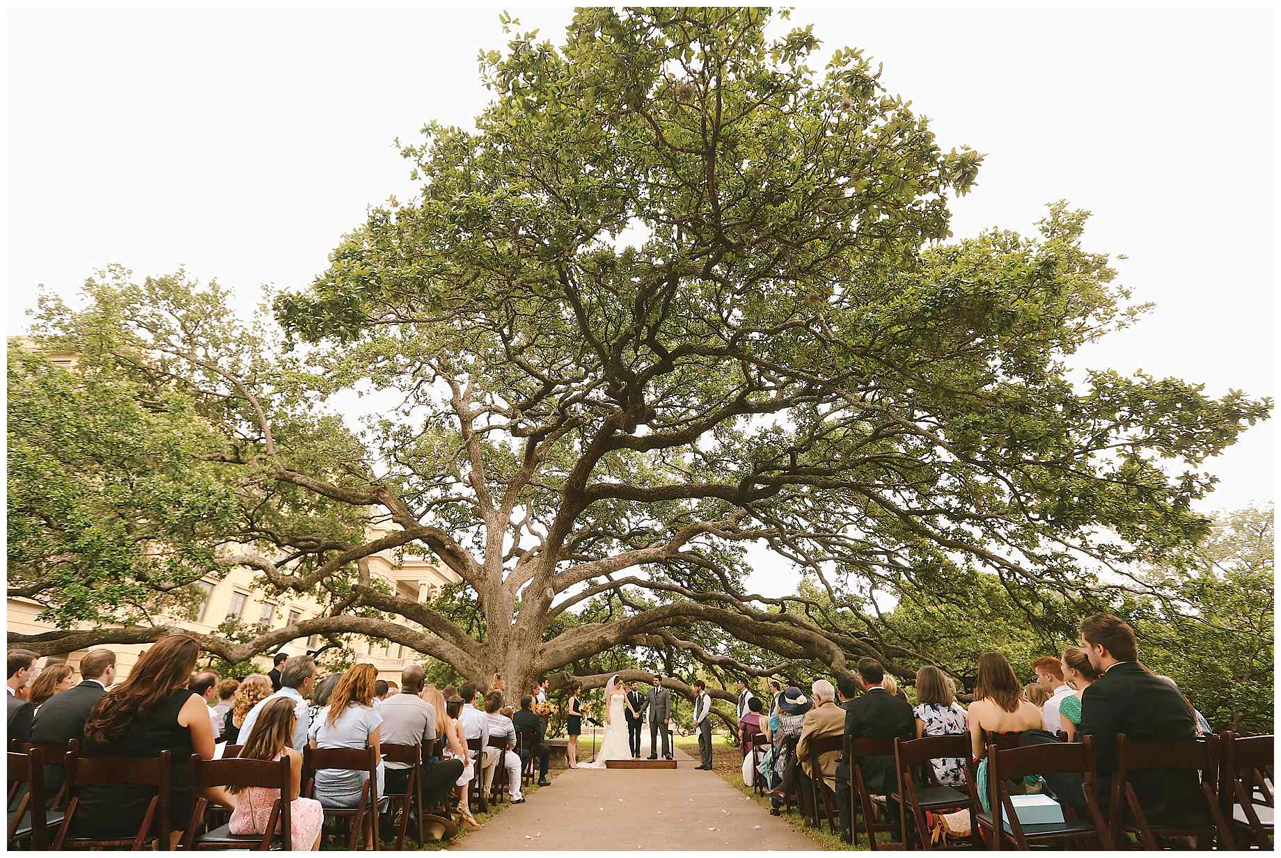 how to get married under the century tree alexm photography